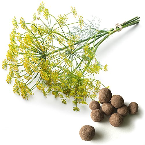 (20 Dill Seed Balls (Long Island Mammoth)- Herb & Vegetable Seed Bombs to make gardening fun and simple!)