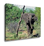 Ashley Canvas, An African Elephant In Botswana Africa Running, Home Decoration Office, Ready to Hang, 20x25, AG5255725
