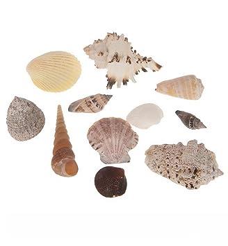 Cf Naturecraft Muschelmix Large 1kg Echte Große Muscheln Und Schnecken Tropisch Aquarium Deko Streudeko Beach Basteln