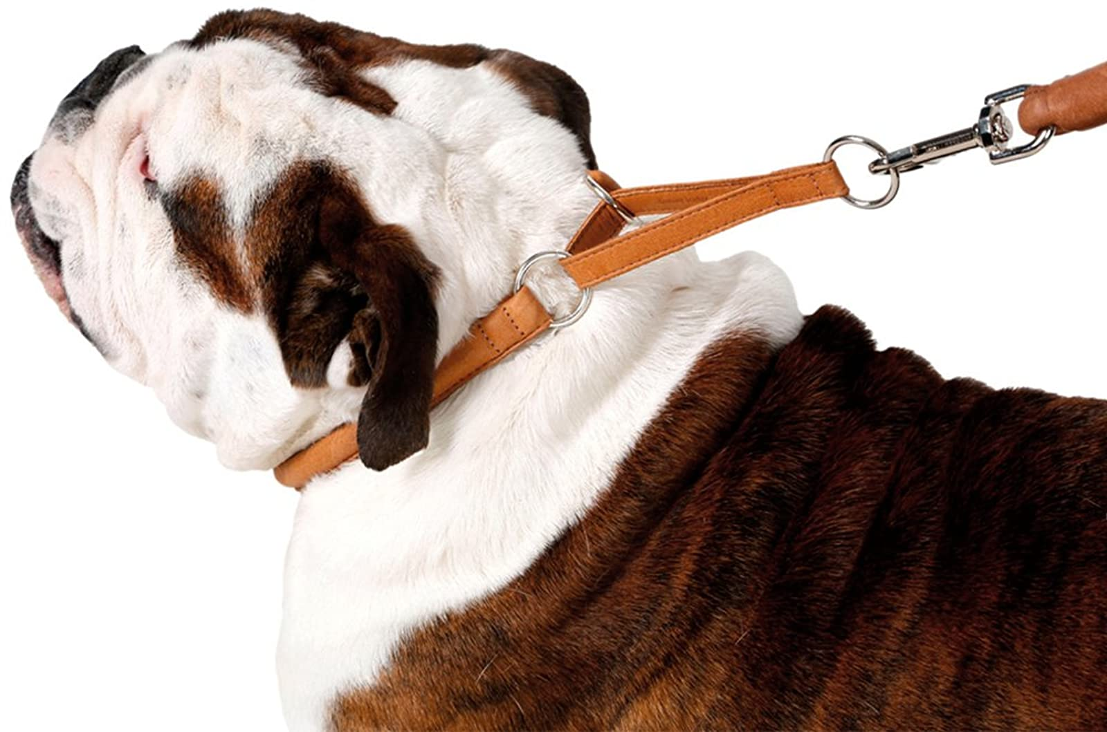CollarDirect Rolled Martingale Dog Collar Training Genuine - 6