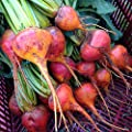 Certified Organic Touchstone Gold Beet Seeds (~125): Non-GMO, Certified Organic, Heirloom Open-Pollinated Seed Packet