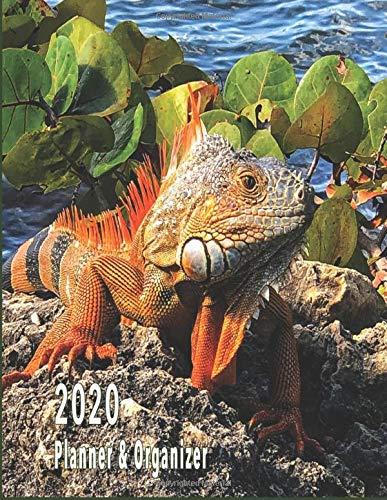 Lizards 2020 Reptile Calendar 15/% OFF MULTI ORDERS!
