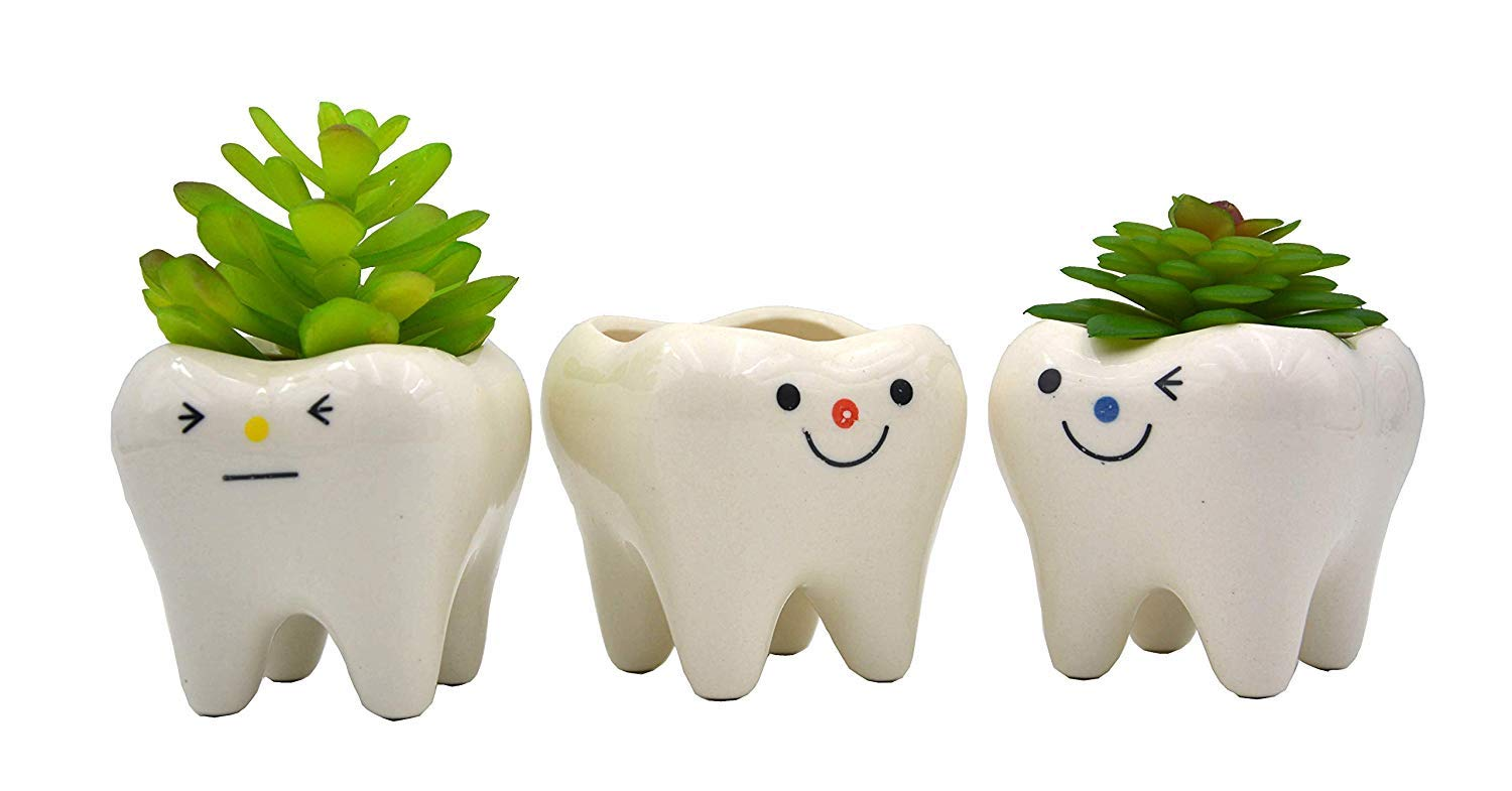 MONMOB Pack of 3 Mini Shaped Planter Ceramic Succulent Plant Pots Set Small for Small Succulent Teeth