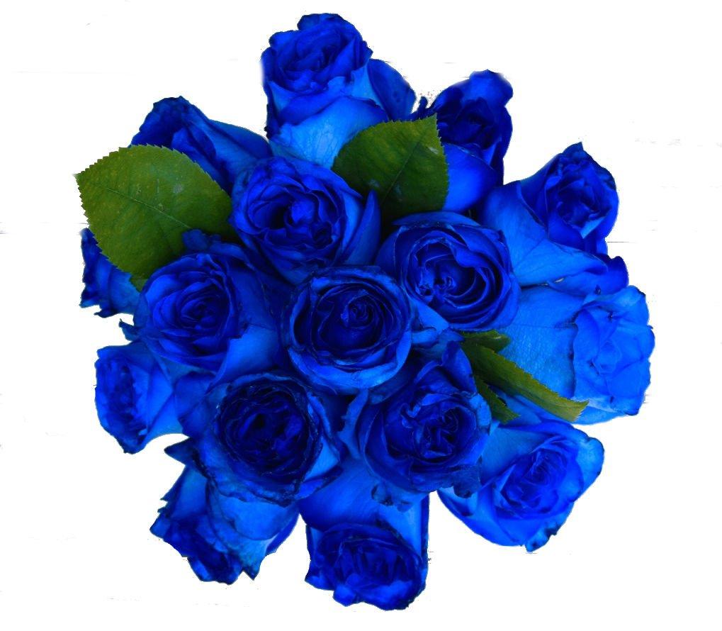Amazon 2 Dozen Farm Fresh Blue Roses Bouquet By Justfreshroses