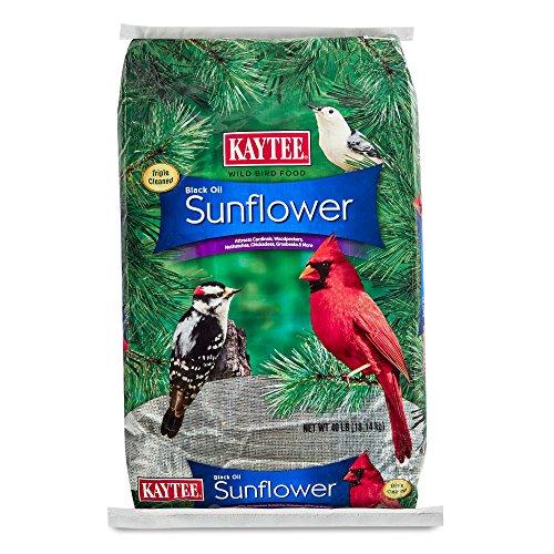 Kaytee Black Oil Sunflower Seed, 40-Pound