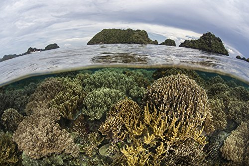 in shallow water in Raja Ampat Indonesia This region is known as the heart of the Coral Triangle and houses the highest marine biodiversity on Earth Poster Print (34 x 22) (Fragile Earth Poster)