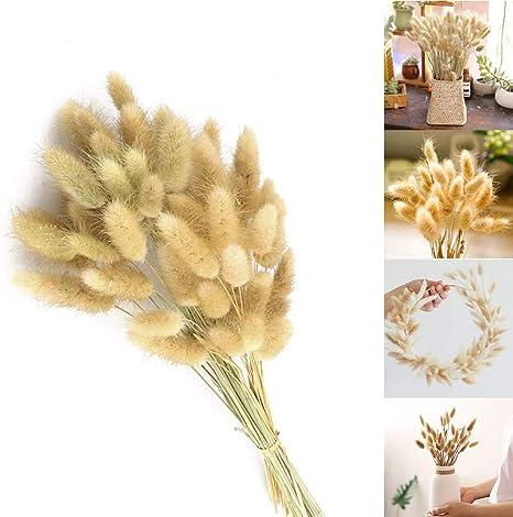 Clacce 30//60//90 St/ück Pampasgras Getrocknet Deko Blumenstrau/ß Deko Schlafzimmer Wohnzimmer Balkon Badezimmer Hochzeit Trockenblumen Vasen Getrocknete Blumen 50cm