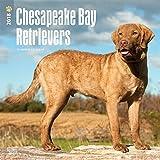 Chesapeake Bay Retrievers 2018 12 x 12 Inch Monthly Square Wall Calendar, Animals Dog Breeds Retrievers (Multilingual Edition)