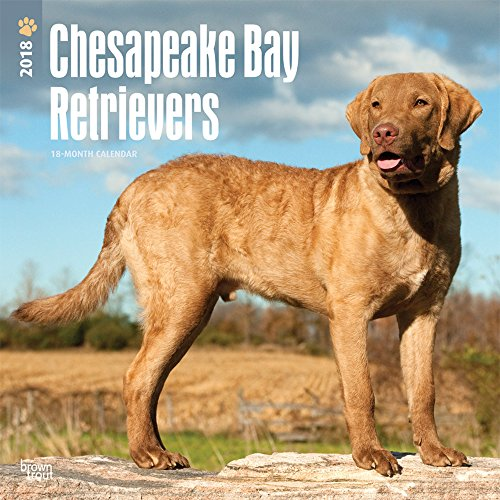 Chesapeake Bay Retrievers 2018 Calendar (Multilingual Edition)