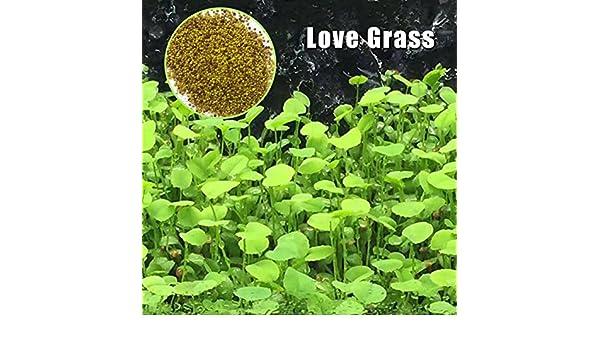 LANDUM Planta Semillas pecera Acuario acuático Hierba de Agua Decor jardín Planta Redonda: Amazon.es: Hogar