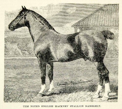 1894 Wood Engraving English Hackney Stallion Danegelt Horse Animal Equestrian - Original In-Text Wood Engraving from PeriodPaper LLC-Collectible Original Print Archive