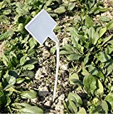 KINGLAKE 50 Pcs White Waterproof Plastic Seed Nursery Garden Labels Curved T-Type Plant Tags For Sale