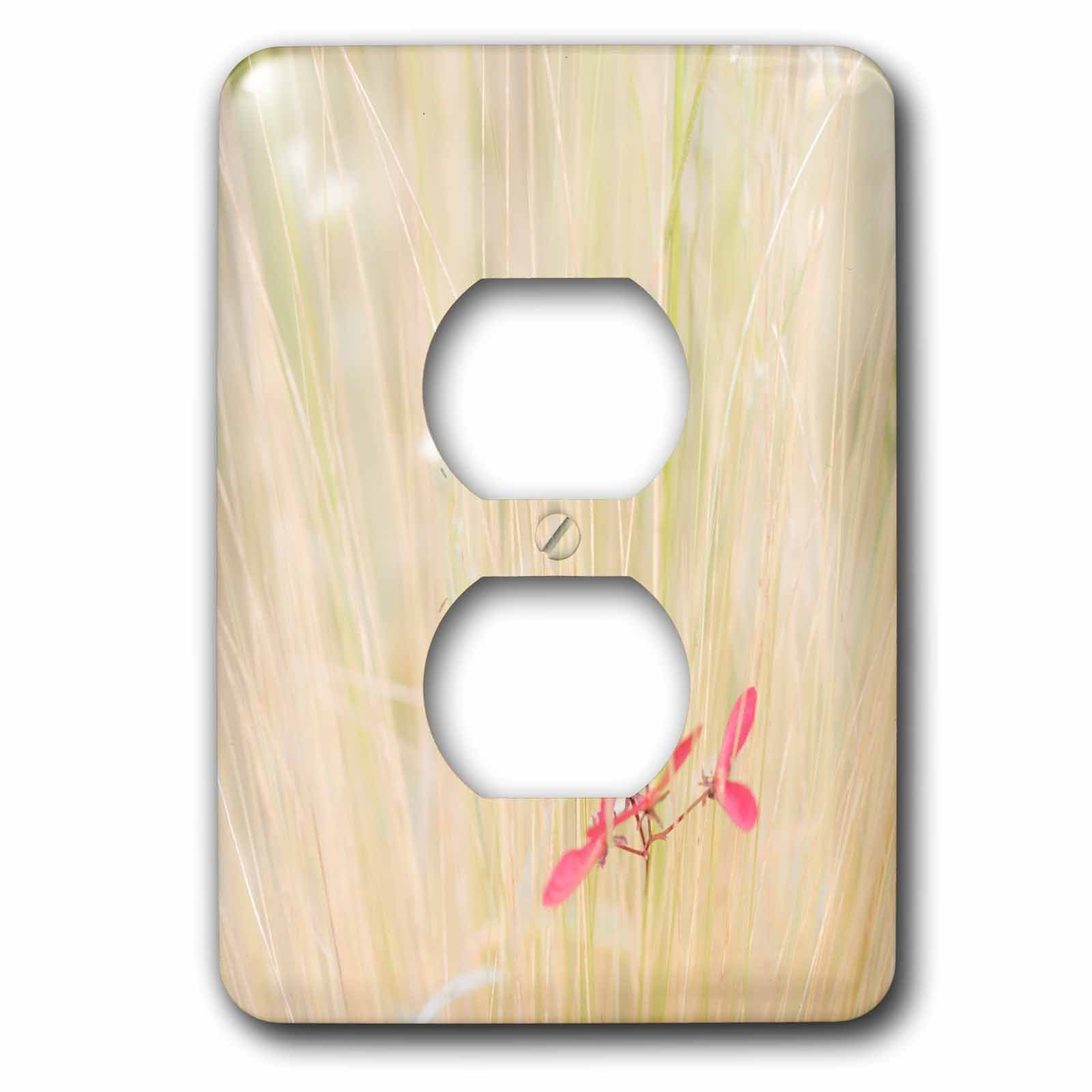 3dRose Danita Delimont - Botanical - USA, Washington State, Seabeck. Maple tree seed in tall grass. - Light Switch Covers - 2 plug outlet cover (lsp_260441_6) by 3dRose