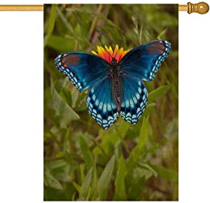 Sertiony Sun Garden Flag,Easter Garden Flag Decorations Outdoor 28X40 Inches Red Spotted Purple Admiral Butterfly Feeding on Blanket Flower Outdoor Ornaments Christmas,Seasonal Garden Flags