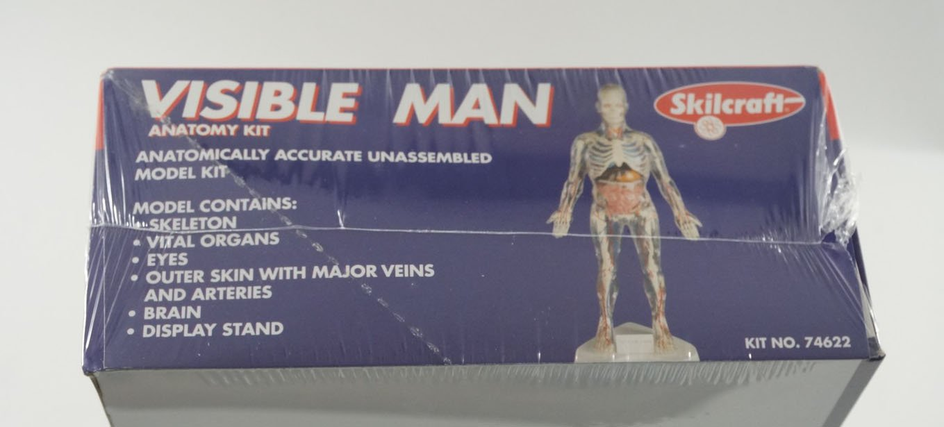 VISIBLE MAN Skeleton Body Organs Medical Anatomy Model Kit New ...