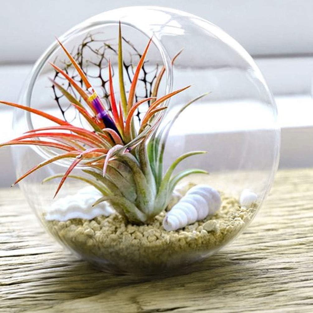 Microlandschaft for Home Tabletop Decoration Hmxpls 1pcs Plant Glass Terrarium Round Air Plant Planter for Succulent