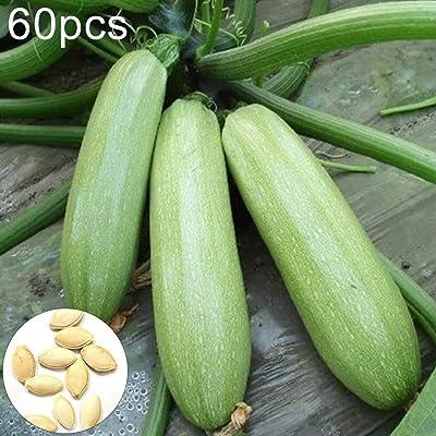 hfjeigbeujfg Garden Seeds, 60Pcs Summer Squash Zucchini Seeds Vegetable Plant Home Garden Balcony Bonsai Decor Zucchini Seeds : Garden & Outdoor
