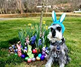 Bunny Rabbit Ears Pet Hat for Dog or Cat Bunny Ears Hat