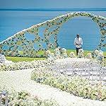 BESKIT-3000-Pieces-Silk-Rose-Petals-Artificial-Flower-Petals-for-Valentine-Day-Wedding-Flower-Decoration-White