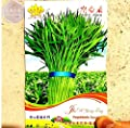 New Thai Water Spinach Kangkong Vegetable 80+ Seeds