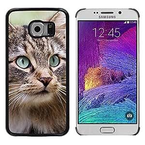 Be Good Phone Accessory // Dura Cáscara cubierta Protectora Caso Carcasa Funda de Protección para Samsung Galaxy S6 EDGE SM-G925 // Maine Coon Norwegian Forest Cat