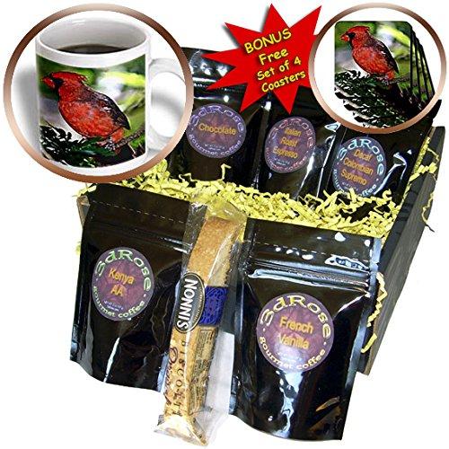 Birds - Cardinal Bird - Coffee Gift Baskets - Coffee Gift Basket (cgb_584_1)