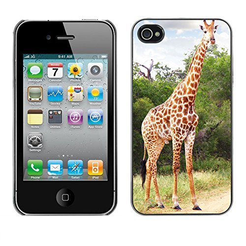 Hülle Case Schutzhülle Cover Premium Case // V00002675 Giraffe // Apple iPhone 4 4S 4G