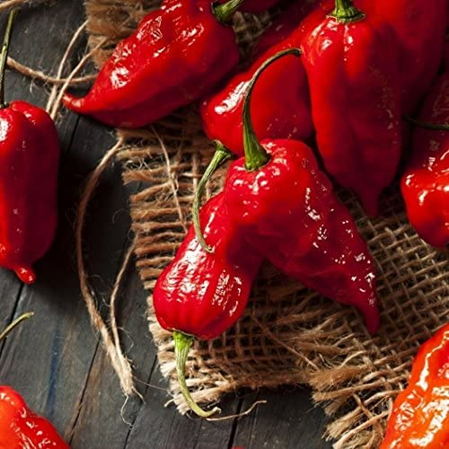 Ghost Pepper Bhut Jolokia Fresh /& Non-GMO Seeds PRODUCT OF USA