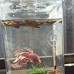 BKLBRAND 50PCS Nature Terminalia Catappa Foetida Almond Leaves Water Filter Aquarium Fish Tank Breeding Shrimp Snails Catfish Ornament