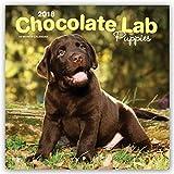 Chocolate Labrador Retriever Puppies 2018 12 x 12 Inch Monthly Square Wall Calendar, Animals Dog Breeds Retriever Puppies (Multilingual Edition)