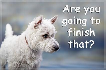 SCOTTISH TERRIER House Rules for Non Pet Owners Funny Fridge Magnet
