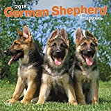 German Shepherd Puppies 2018 12 x 12 Inch Monthly Square Wall Calendar, Animals Dog Breeds Puppies