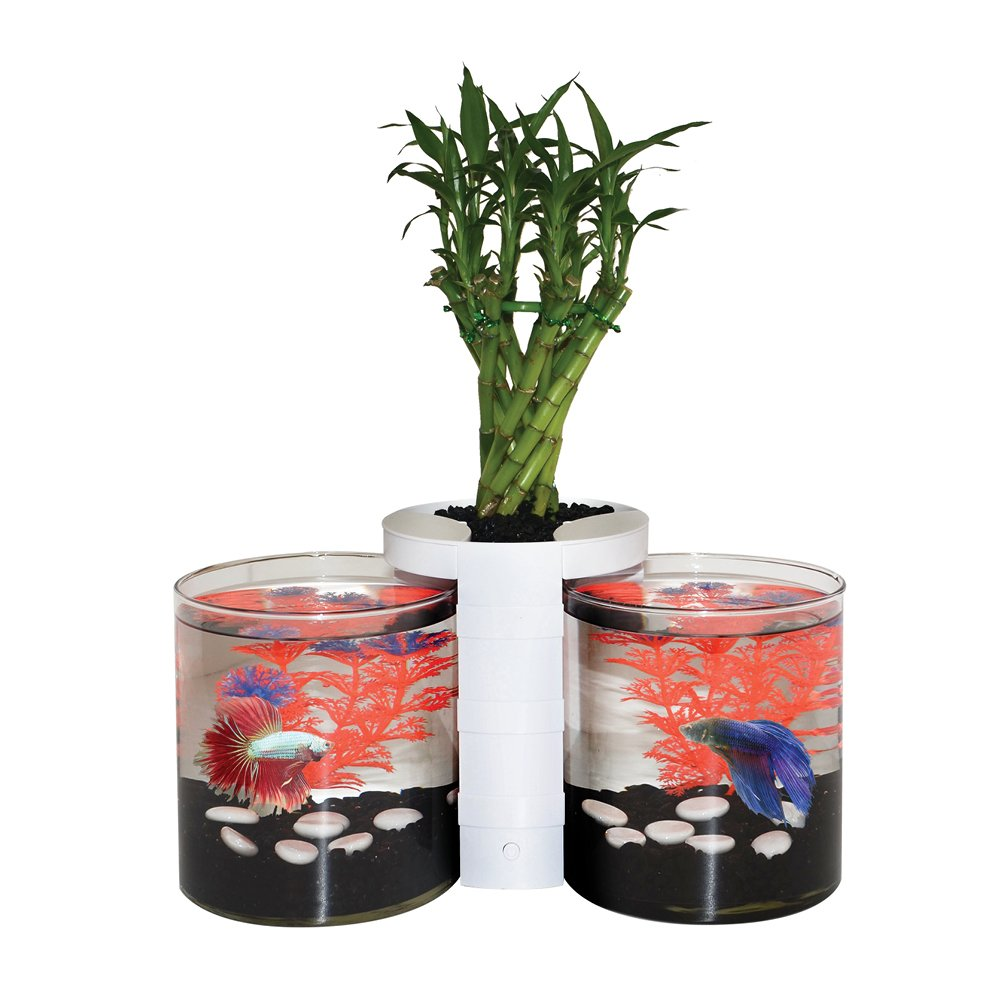 White Elive Betta Cylinder and Planter, White.5 Gallon