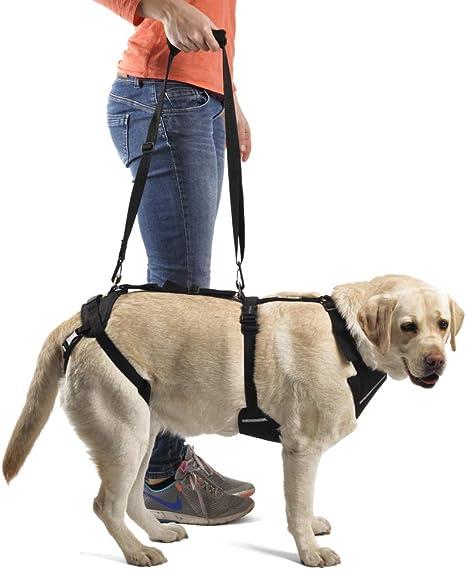 Arnés canino Integral - XXXL: Amazon.es: Productos para mascotas