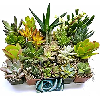 Fat Plants San Diego Succulent Plants (20)