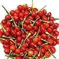 Wiri Wiri Hot Pepper Seeds - A Variety from Guyana. Very Hot!!!!!!!