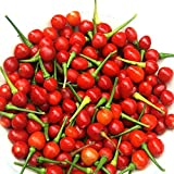 Wiri Wiri Hot Pepper Seeds - A variety from Guyana. Very Hot!!!!!!!(5 - Seeds)