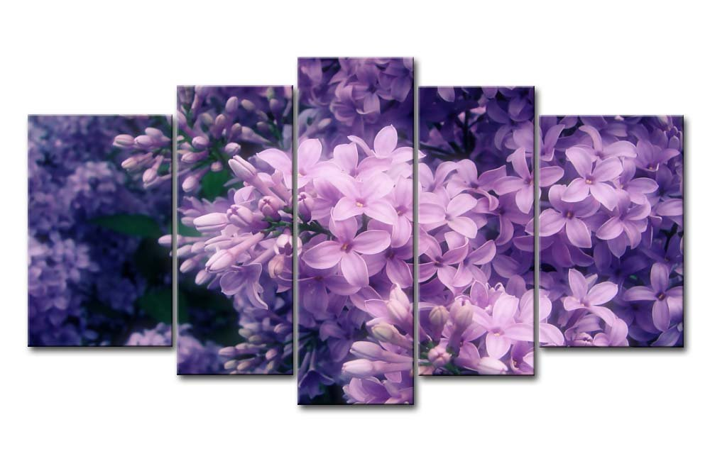 Purple Canvas Picture