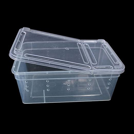 Jiamins – Caja de plástico Transparente Tapa, terrarios de alimentación cría de Reptiles, Caja para mudanza (Insectos Reptiles: Amazon.es: Productos para mascotas