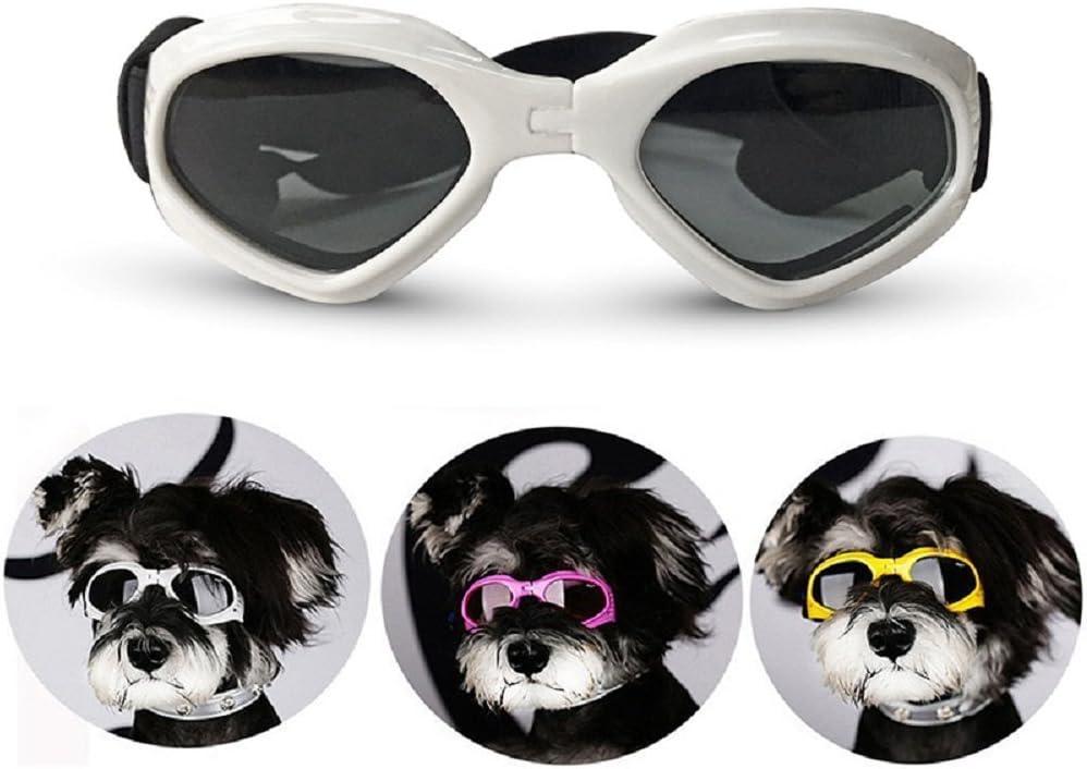 Lunettes de soleil pour chien