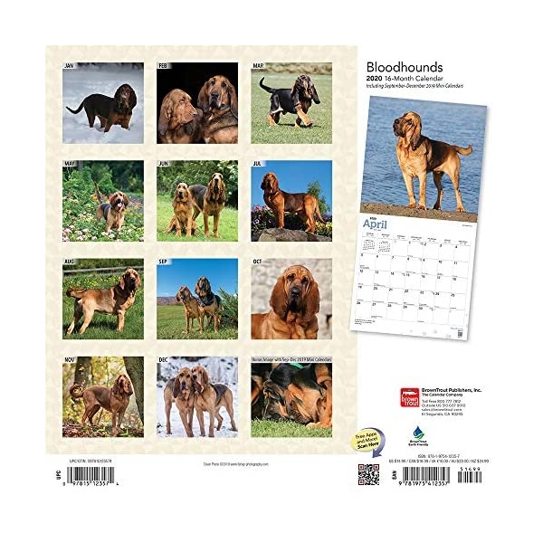 Bloodhounds 2020 12 x 12 Inch Monthly Square Wall Calendar, Animals Dog Breeds Hound 2