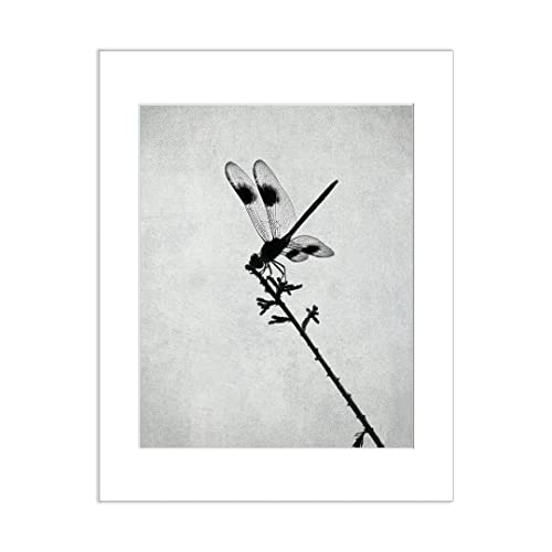 Dragonfly wall art 5x7 black and white matted photo print insect artwork