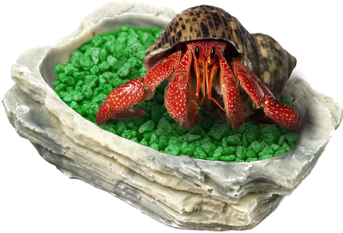 SunGrow Hermit Crab Feeding Bowl, 3.5x3 Inches, Keeps Crabitat Clear, Durable and Sturdy, Attractive Multifunctional Decor, Serve as Climbing Toy or Drinking Bowl, Swimming Pool and More, 1 Piece