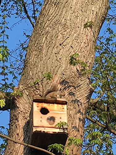 Squirrel Houses. NESTING BOX. 1 UNIT. BY. M.HOLLEY. FOR SQUIRREL RE-HABE AND OUT SIDE USE. Best on market. Made in Ohio U.S.A. ONLY BY U.S.A. RAW MATERIAL AND U.S.A. (Squirrel Nesting Box)