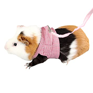Amazon.com : FLAdorepet Guinea Pig Rabbit Harness and Leash Cotton