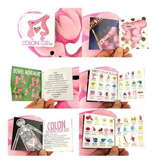 Colon Plush | I Heart Guts Series | Organ Plushies 4