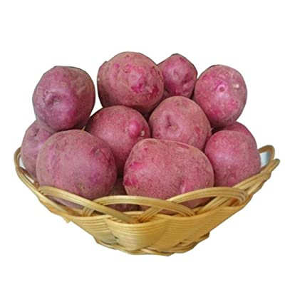 HOTUEEN 50pcs Dark Red Potato Seeds Plants Perennials Planting Vegetables Home Garden Bonsai Flowers : Garden & Outdoor