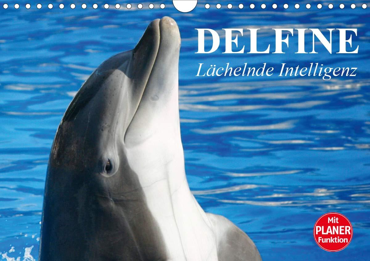 Delfine   Lächelnde Intelligenz  Wandkalender 2020 DIN A4 Quer