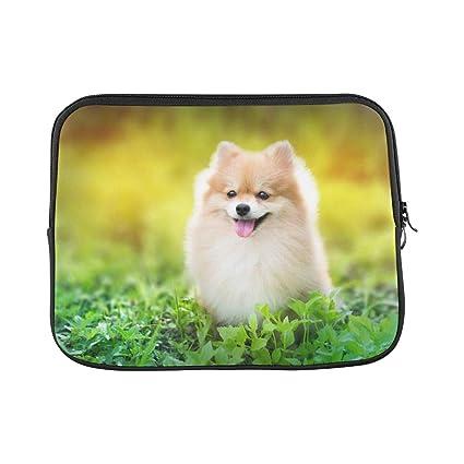 Amazon Com Design Custom Cute Fluffy Pomeranian Dog Sitting Spring