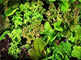 David's Garden Seeds Lettuce Rocky Top Mix SL7033 (Multi) 200 Non-GMO, Heirloom Seeds